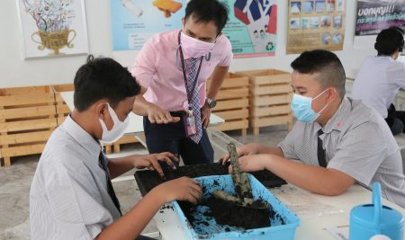 Our Year 8 students have learned to cultivate rice seedlings.